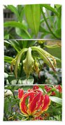 From Bud To Bloom - Gloriosa Named Rothschildiana Bath Towel