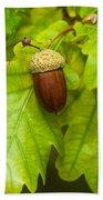 Fruit Of An Oak Tree Ripe In Autumn Bath Towel