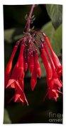 Fucshia Red Flower Bath Towel