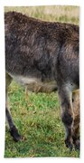 Full Grown Donkey Grazing Bath Towel