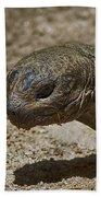 Galapagos Giant Tortoise Bath Towel