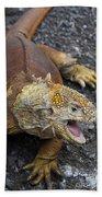 Galapagos Land Iguana Bath Towel