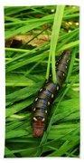 Gallium Sphinx Caterpillar Bath Towel
