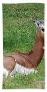 Gazelle At Rest 1 Bath Towel