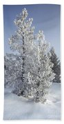 Ghost Trees Of Yellowstone Hand Towel