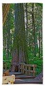 Giant Cedar Grove On Giant Cedars Trail In Mount Revelstoke Np-bc Bath Towel