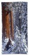 Giant Sequoia Trees Sequoiadendron Bath Towel