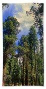 giant sequoias sequoiadendron gigantium yosemite NP Bath Towel