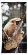 Gibbon On A Swing Bath Towel