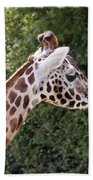 Giraffe 01 Bath Towel by Paul Gulliver