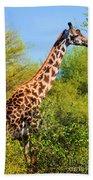 Giraffe Among Trees. Safari In Serengeti. Tanzania Bath Towel