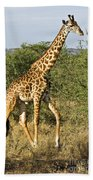 Giraffe From Tanzania Bath Towel