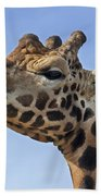 Giraffes 3 Bath Towel
