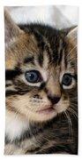 Gizmo The Kitten Bath Towel