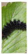 Glanville Fritillary Butterfly Caterpillar - Melitaea Cinxia Bath Towel