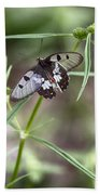 Glass-wing Butterfly Bath Towel