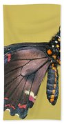 Gold Rim Swallowtail Butterfly Bath Towel
