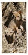 Golden Jackal Canis Aureus Cubs Bath Towel