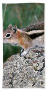 Golden Mantled Ground Squirrel Bath Towel