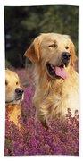Golden Retriever Dogs In Heather Bath Towel