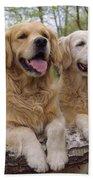 Golden Retriever Dogs Bath Towel