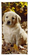 Golden Retriever Puppy Dog In Fallen Bath Towel