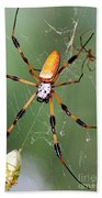 Golden Silk Spider Capturing A Stinkbug Bath Towel