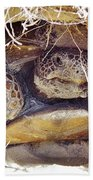 Gopher Tortoise Bath Towel