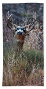 Grand Canyon Deer Hand Towel
