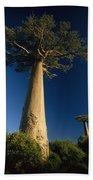 Grandidiers Baobab Trees Madagascar Bath Towel