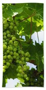 Grapes In A Vineyard Bath Towel