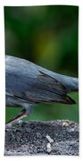 Gray Catbird Dumetella Carolinensis Bath Towel