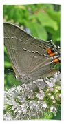 Gray Hairstreak Butterfly - Strymon Melinus Bath Towel