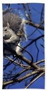 Gray Squirrel Bath Towel