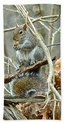 Gray Squirrel - Sciurus Carolinensis Bath Towel