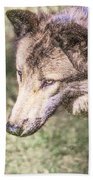 Gray Wolf Grey Wolf Canis Lupus Bath Towel