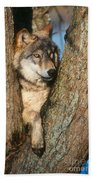 Gray Wolf In Tree Canis Lupus Bath Towel