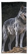 Gray Wolf On Hillside Endangered Species Wildlife Rescue Bath Towel