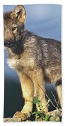 Gray Wolf Pup Montana Bath Towel