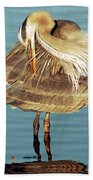 Great Blue Heron Ardea Herodias Preening Bath Towel