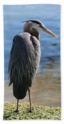 Great Blue Heron By Pond Bath Towel