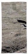 Great Blue Heron Flight Bath Towel