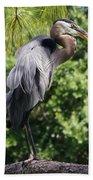Great Blue Heron Vii Bath Towel