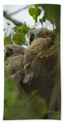 Great Horned Owlets 5 20 2011 Bath Towel