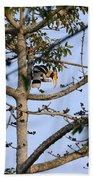 Great Indian Hornbill Bath Towel