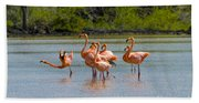Greater Flamingos Hand Towel