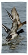 Greater Scaup Pair Bath Towel