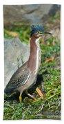 Green-backed Heron Butorides Virescens Bath Towel