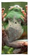 Green Frog Bath Towel
