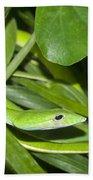 Green Snake Hand Towel